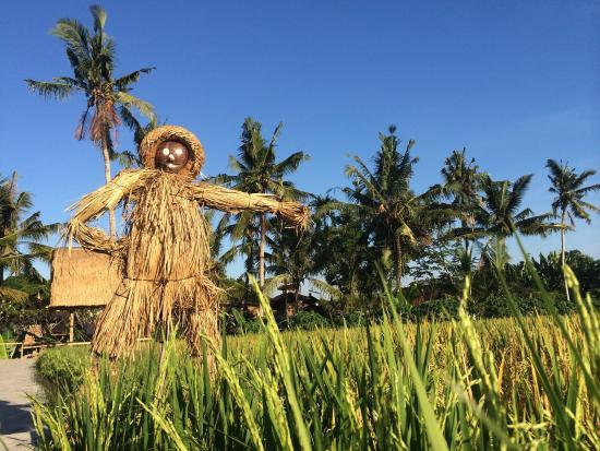 Lelakut, Hantu Orang-orangan Sawah dari Bali. Diantara rumbai-rumbai plastik yang dibentangkan dengan tali itu, anda juga akan melihat orang-orangan sawah yang terangguk-angguk ditiup angin